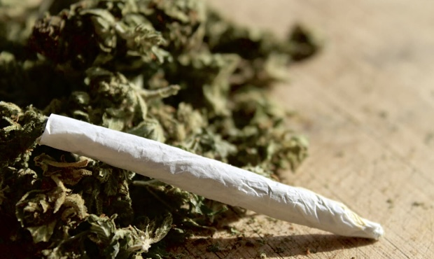 Read more about the article ต้นกัญชา ยาเสพติดสู่พืชมีประโยชน์